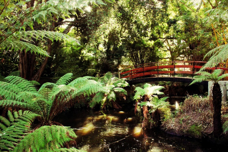 arderne-gardens-with-its-champion-trees-in-claremont-cape-town-south-africa-4