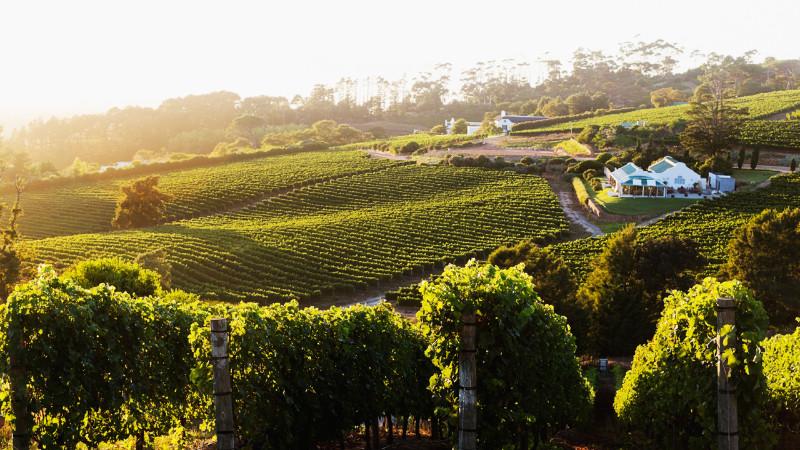 Constantia_vineyards_cape_town